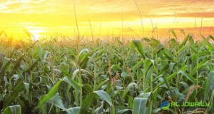 EXPORTERS OF CROPS ESTABLISH A PLAN TO DECLINES